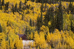 Golden Aspen Trees. The golden aspen trees of a Colorado autumn surround ruins from the mining era in near Leadville, CO Stock Photography