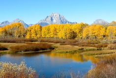 Golden aspen trees in the morning light at Oxbow Bend, Grand Teton National Park, Wyoming Royalty Free Stock Photography