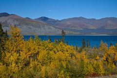 Golden Aspens contrast with the deep blue green waters of Klaune Lake Royalty Free Stock Photos