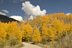 Golden Aspens and country road Royalty Free Stock Photography