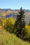 Golden Aspens on McClure Pass, Colorado. Autumn scene in the mountains with golden aspens on slopes Stock Photography