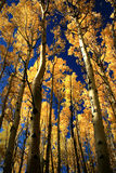 Golden Aspens near Santa Fe Stock Photo