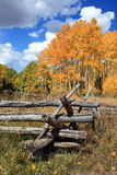 Golden Aspens and Wood Fence Royalty Free Stock Photo