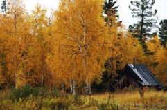 Golden autumn. Striking golden trees at autumn Royalty Free Stock Photos