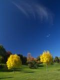 Golden autumn. Golden ash trees in autumn Stock Photo