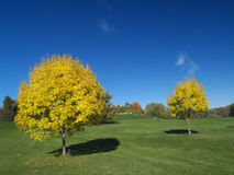 Golden autumn. Golden ash trees in the park royalty free stock photography