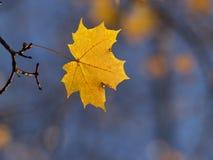 Golden autumn Royalty Free Stock Photos