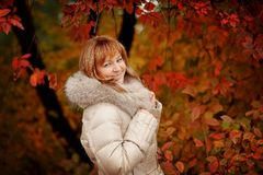 Golden autumn Stock Images