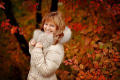 Golden autumn Stock Photos
