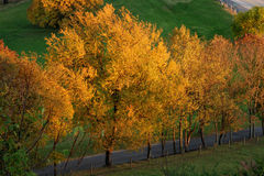 Golden Autumn-4 Royalty Free Stock Photography