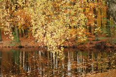 Golden autumn royalty free stock photo