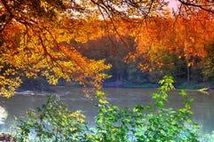 Golden autumn. Leaves in an autumn light royalty free stock photo