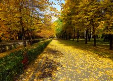 Golden autumn alley. Of the park in sunny day Royalty Free Stock Images