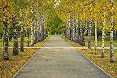 Golden autumn. Autumn alley in the park Royalty Free Stock Image