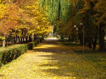 Golden autumn alley. Of the park in sunny day Stock Images