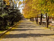 Golden autumn alley. Of the park in sunny day Stock Image