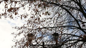 Golden autumn, autumn forest. Tree with yellow and orange leaves in the wind in a sunny park stock video footage
