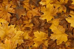 Golden autumn background with fall leaves Royalty Free Stock Images