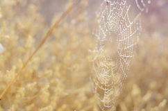 Golden autumn background. Spider network and snails in dew drops under morning sun rays. Seasonal backdrop for your stock photo