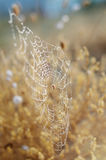 Golden autumn background. Spider network and snails in dew drops under morning sun rays. Seasonal backdrop for your Royalty Free Stock Photos