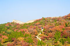 Golden autumn in Badaling Forest Park Royalty Free Stock Photos