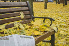 Golden autumn. Beautiful maple leaves on a bench. Golden autumn. Beautiful maple leaves and newspaper on a bench in October. Kiev, Ukraine stock images