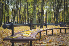 Golden autumn. Beautiful maple leaves on a bench. In October. Kiev, Ukraine royalty free stock image