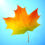 Golden autumn bright vector leaf in a blue sky Royalty Free Stock Photo