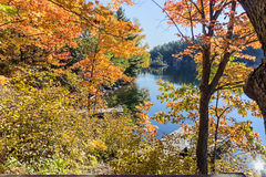 Golden autumn in Canada. Orange and yellow leaves. Landscape at the lake royalty free stock photos