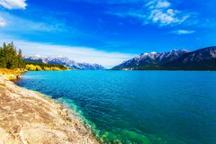 Golden Autumn in the Canadian Rockies. Smooth water of the Abraham lake, the golden foliage of aspen and birches is reflected. royalty free stock photography