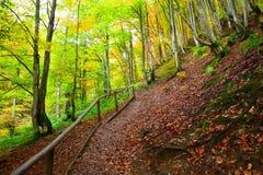 Golden Autumn in the Carpathians Stock Photo