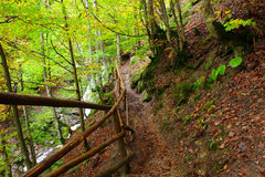 Golden Autumn in the Carpathians Stock Images