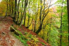 Golden Autumn in the Carpathians Stock Image