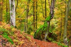 Golden Autumn in the Carpathians Stock Photography