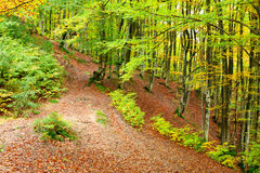 Golden Autumn in the Carpathians Royalty Free Stock Photos