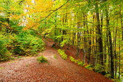 Golden Autumn in the Carpathians Royalty Free Stock Image