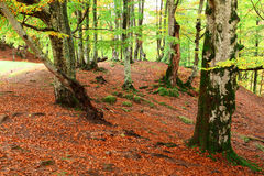 Golden Autumn in the Carpathians Stock Photos