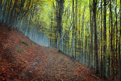 Golden Autumn in the Carpathians Royalty Free Stock Images
