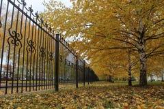 Golden Autumn in Cheboksary Stock Photography