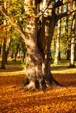 Golden autumn in city park Royalty Free Stock Photography