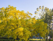Golden autumn in the city park Royalty Free Stock Images
