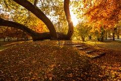 Golden autumn in city park Royalty Free Stock Photos