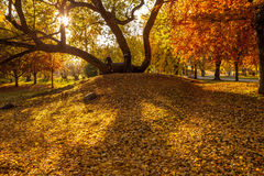 Golden autumn in city park Stock Photography