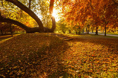 Golden autumn in city park Stock Image