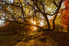 Golden autumn in city park Royalty Free Stock Images