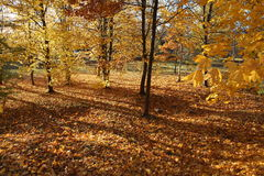 Golden autumn in city park Royalty Free Stock Photo