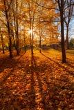 Golden autumn in city park Stock Photos