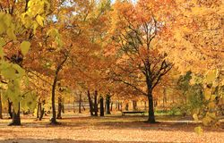 The golden autumn in the city park. Victory Park, Saratov, Russia. royalty free stock photo