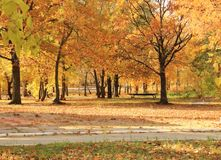 The golden autumn in the city park. Victory Park, Saratov, Russia. stock photos