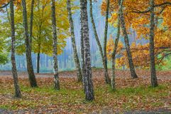 Golden autumn colors stock image